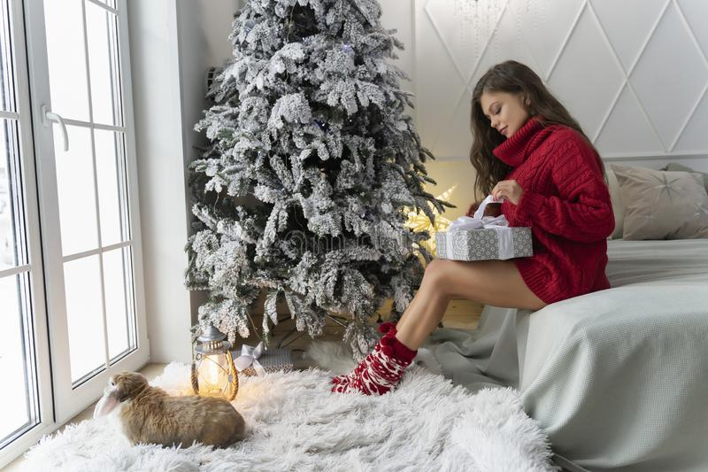 Beautiful leggy young girl, wearing red sweater and wool socks sits at the window, looks on rabbit and unpacks a gift in christmas royalty free stock photography