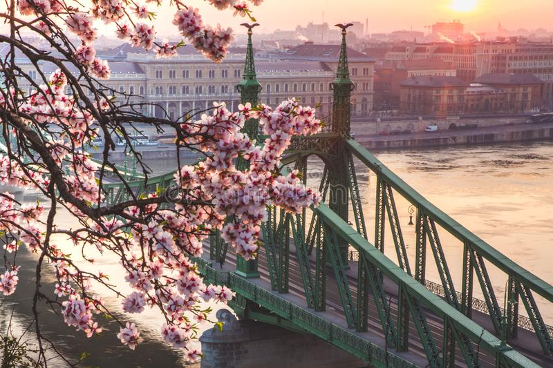 Beautiful Liberty Bridge at sunrise with cherry blossom in Budapest, Hungary. Spring has arrived to Budapest. Beautiful Liberty Bridge at sunrise with cherry royalty free stock images