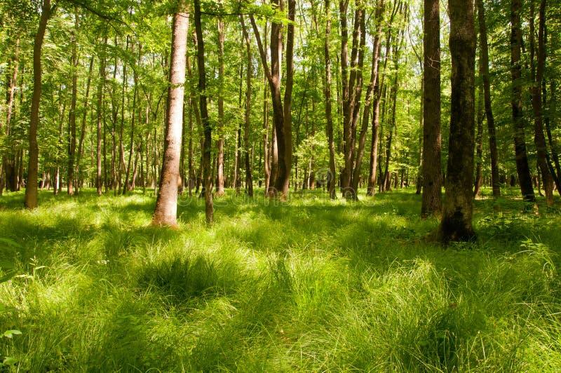 Beautiful light on green forest floor stock image