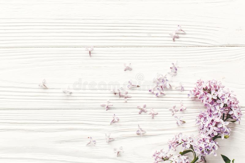 Beautiful lilac flowers on rustic white wooden background top vi. Ew. space for text. greeting card. earth day. happy mothers woman day. eco. hello spring flat stock images