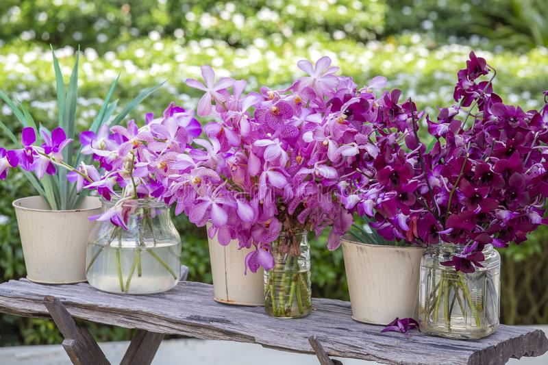 Beautiful lilac pink orchids in a vase in tropical garden, outdoors, nature concept. Exotic colorful orchid bouquet stock photography