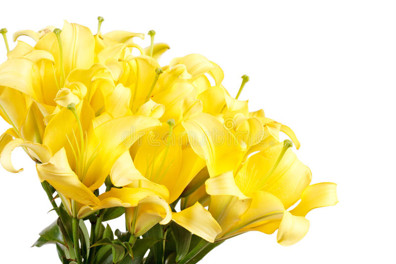 Download Beautiful Lilies Royalty Free Stock Photos - Image: 21439738