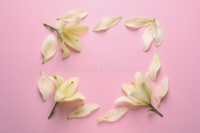 Beautiful lilies on pink background. Space for text. Beautiful lilies on pink background, flat lay. Space for text royalty free stock photos