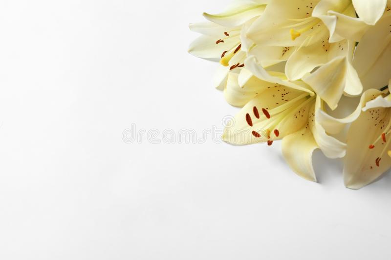 Beautiful lilies on white background. Top view stock photo