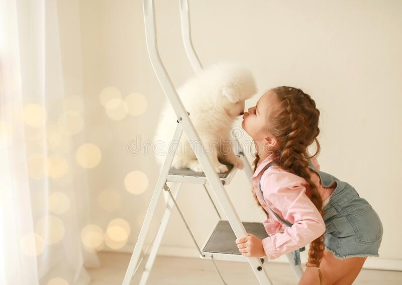 Beautiful little blonde hair girl, has fun smile face, embraces and plays with puppy dog Japanese Spitz. Child and. Animals portrait. Happy amazing couple. Baby stock image