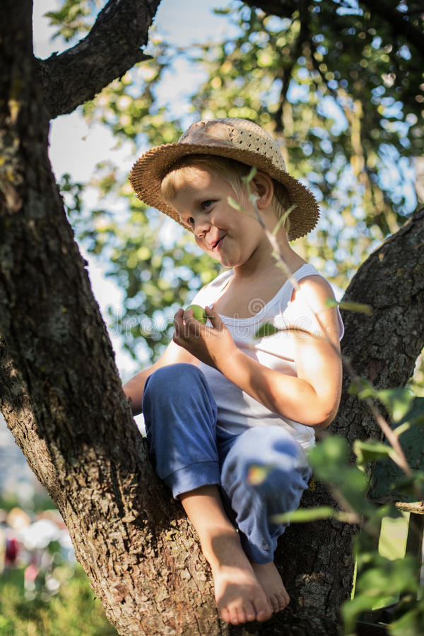 Beautiful little boy sitting on a tree and holding apple stock images