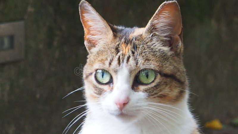 Beautiful little cat. A beautiful little cat stock photography