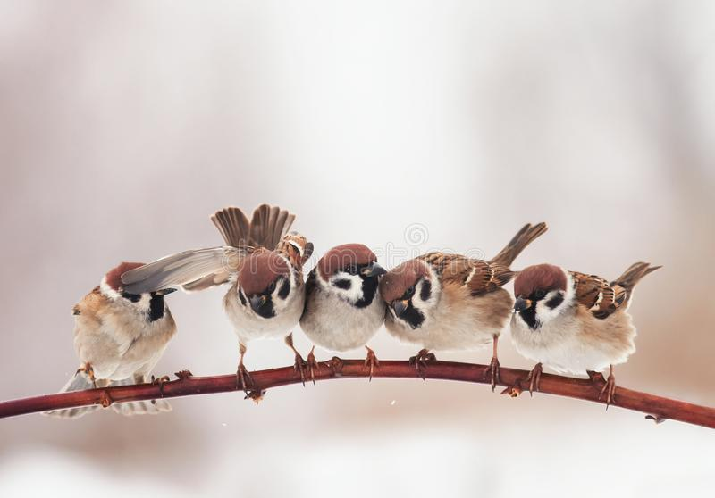 Little Christmas birds sitting on otcei in the garden and funny stock photos