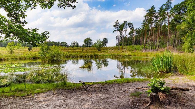 Little forest fen in the Netherlands. A beautiful little forest fen surrounded with trees near National park De Hoge Veluwe in the Netherlands stock image