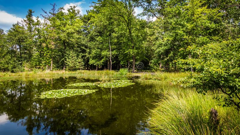Little forest fen in the Netherlands. A beautiful little forest fen surrounded with trees near National park De Hoge Veluwe in the Netherlands royalty free stock photos