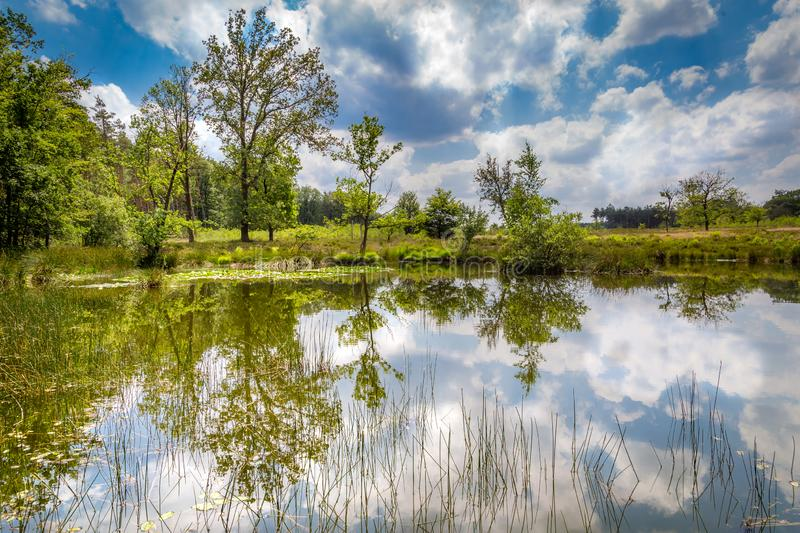 Little forest fen in the Netherlands. A beautiful little forest fen surrounded with trees near National park De Hoge Veluwe in the Netherlands stock images