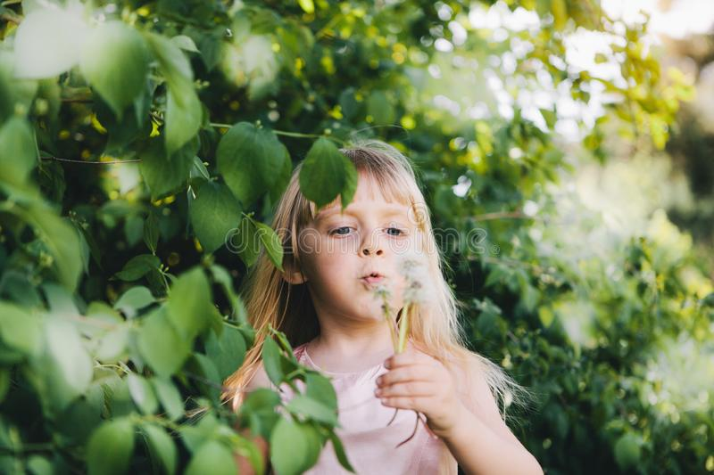 Beautiful little girl blowing dandelion and playing in park in summer, childhood and activity stock image