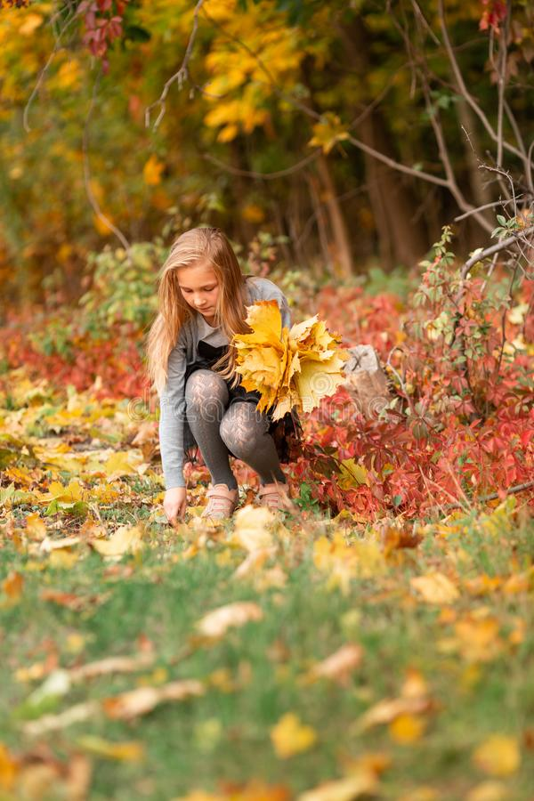 Beautiful little girl with autumn leaves in the park. Beautiful little girl gathering autumn leaves in the park outdoor royalty free stock photography