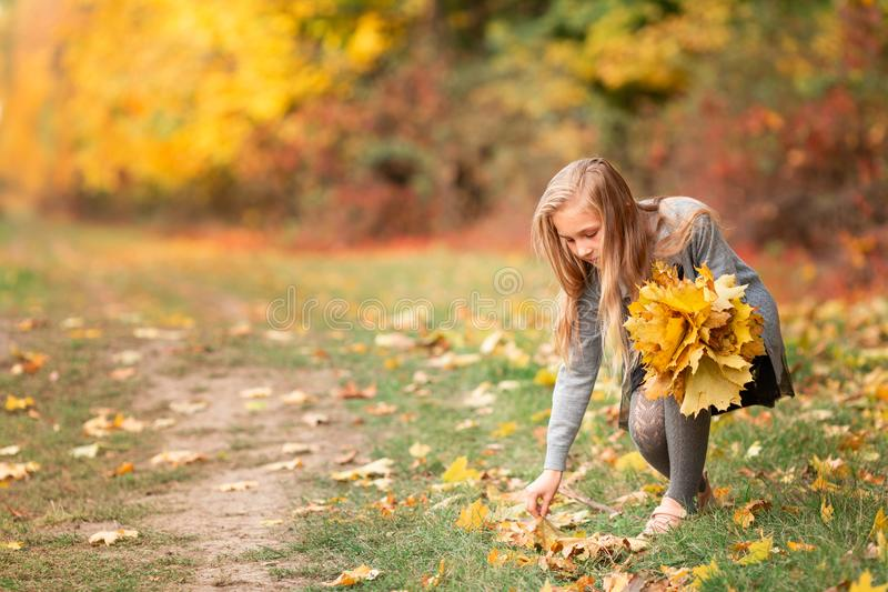 Beautiful little girl with autumn leaves in the park. Beautiful little girl gathering autumn leaves in the park outdoor stock images