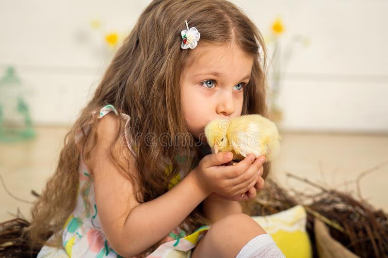 Beautiful little girl kisses a cute fluffy Easter chicken stock image