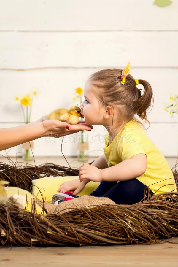 Beautiful little girl kisses a cute fluffy Easter duckling.  stock image