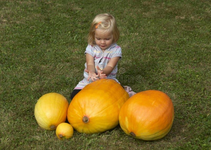 Beautiful little kid girl having fun with farming on organic pumpkin patch stock image