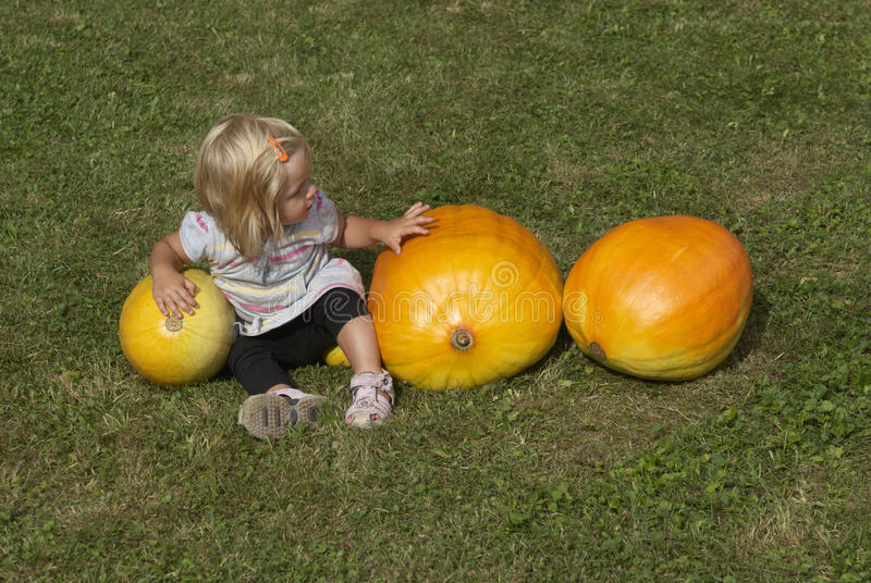Beautiful little kid girl having fun with farming on organic pumpkin patch royalty free stock images