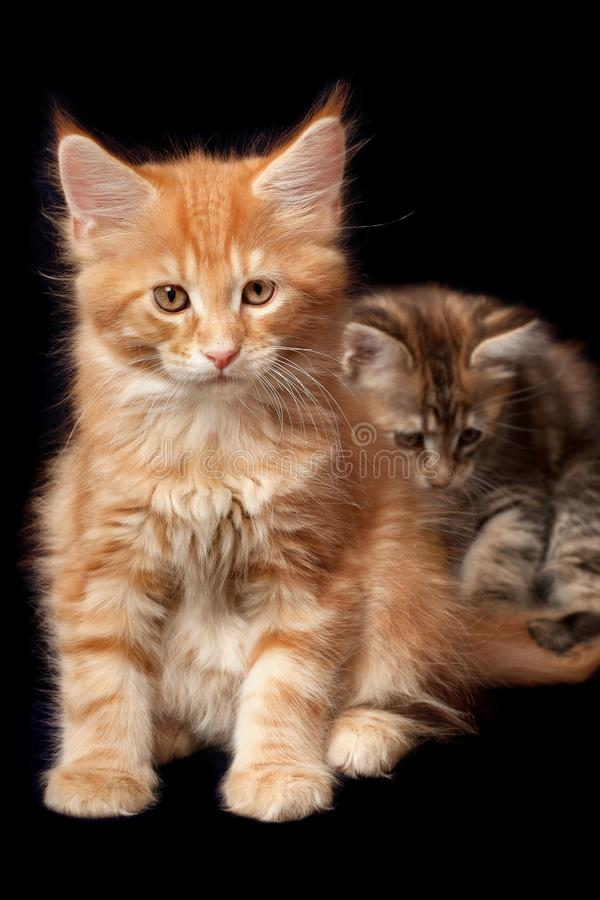 Beautiful Little Kittens Stock Images