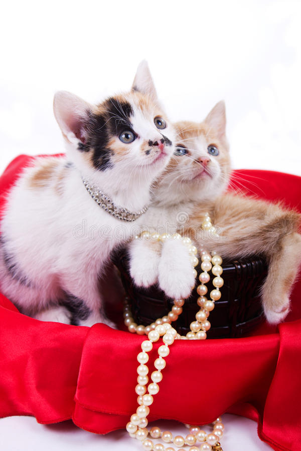 Download Beautiful little  kittens stock photo. Image of little - 25163266