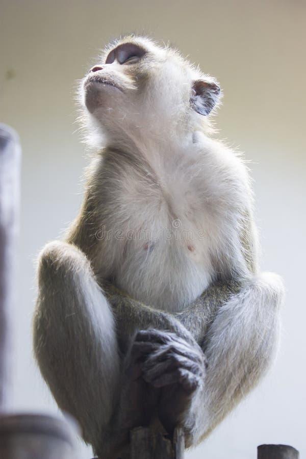 Beautiful little monkey stock image