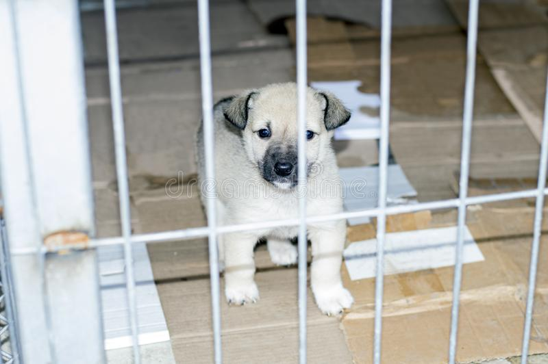 Beautiful little puppy in city shelter stock images