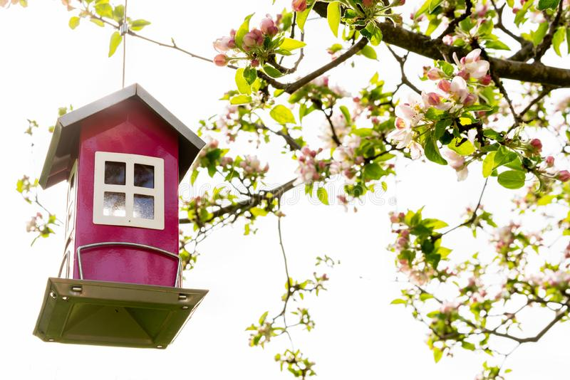 Beautiful little red bird feeder house hanging in a blooming blossom apple tree with bright sky. stock photos