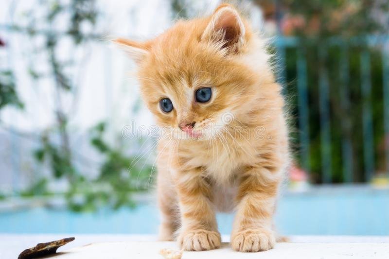 Beautiful little red kitten with blue eyes in street background. Portrait of tabby cat. Street cat and lifestyle concept.  royalty free stock photos