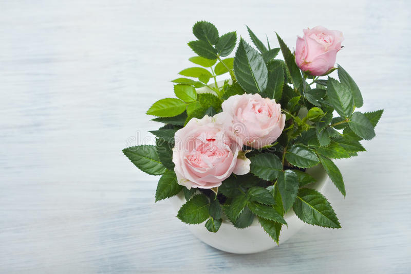 Download Beautiful little roses stock image. Image of little, fresh - 39502459
