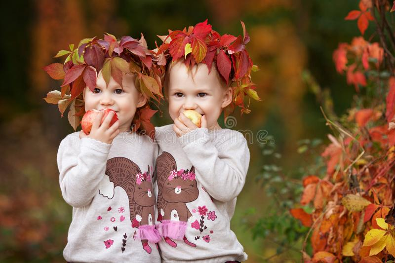 Beautiful little twin girls  holding apples in the autumn garden.  Little girls playing with apples. Toddler eating fruits at fall royalty free stock images
