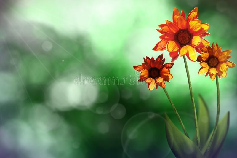 Beautiful live gazania with empty on left on natural leaves and sky blurred bokeh background. Floral spring or summer flowers stock photo