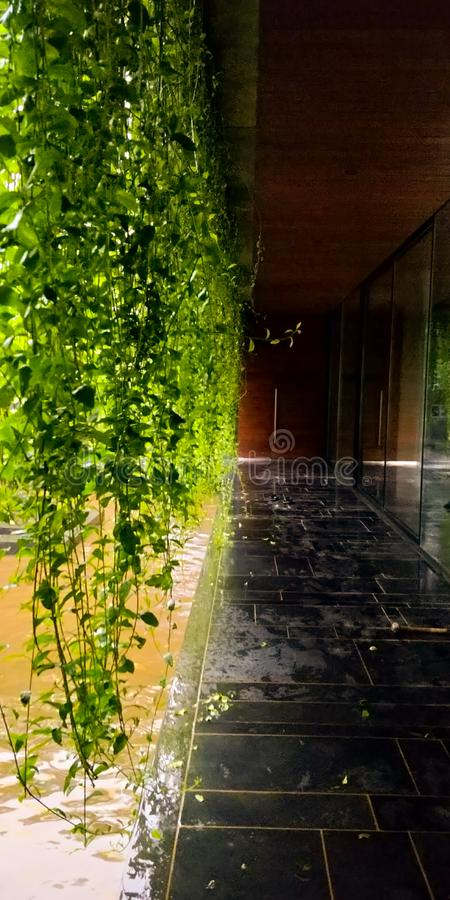 beautiful lobby with hanging leaves royalty free stock photography