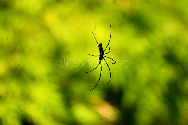 Beautiful Lonely Black Small Spider stock photo