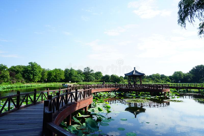 Beautiful lotus in Old Summer Palace Park with Pavilions royalty free stock photos