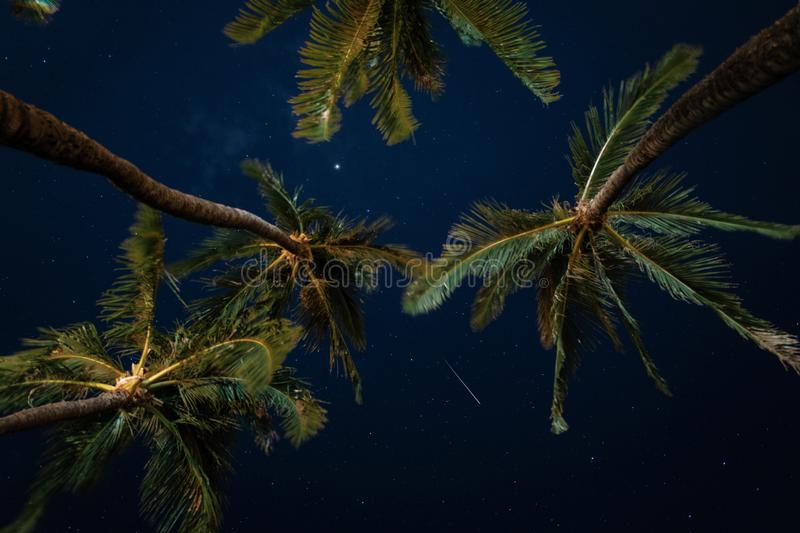 Beautiful low angle shot of palm trees under the starry night sky stock illustration