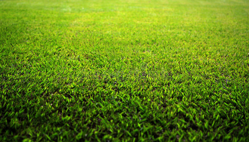 Beautiful lush green grass lawn in a park royalty free stock photography