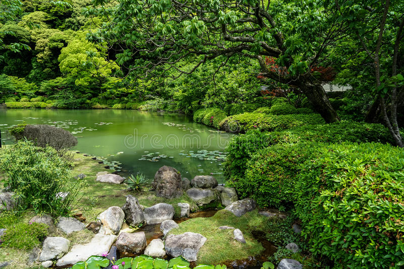 Beautiful lush green japanese garden landscape with shades of green plant, stone and lotus pond on sunny day, Beppu stock image