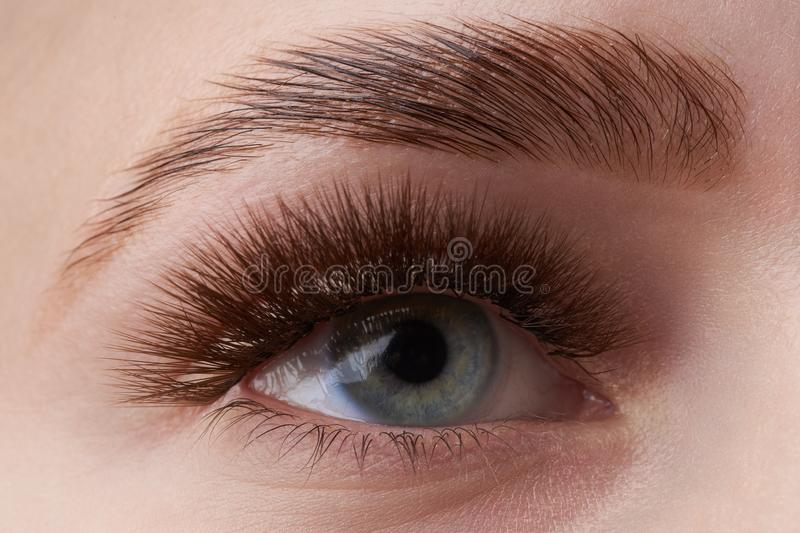 Beautiful macro photography of a woman`s eye with extreme make-up of long eyelashes. Perfect long eyelashes. without cosmetics. royalty free stock photography