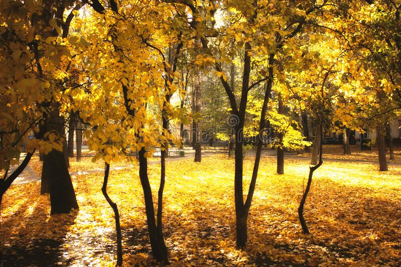 Beautiful magic landscape with autumn trees and falling yellow leaves stock photo