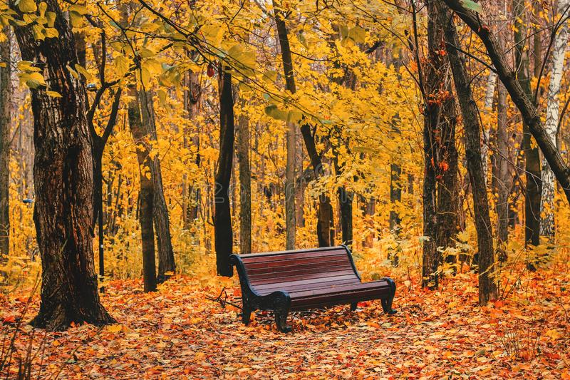 Beautiful magic landscape with autumn trees and falling yellow leaves in the park with benches royalty free stock photography