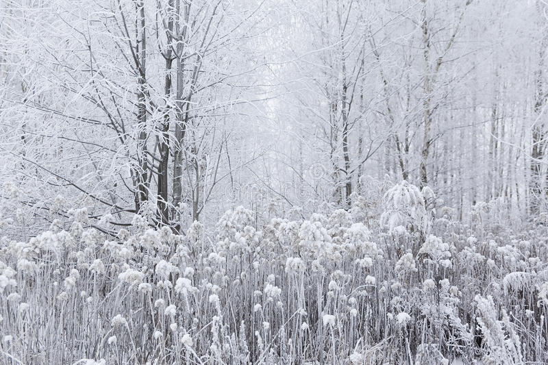 Beautiful magic white frozen winter in the forest. Lithuania, Eu royalty free stock photo