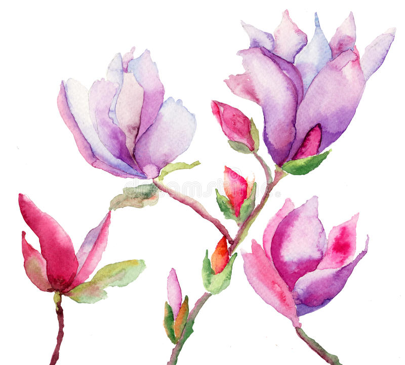 Download Beautiful Magnolia flowers stock illustration. Image of drawing - 27820714