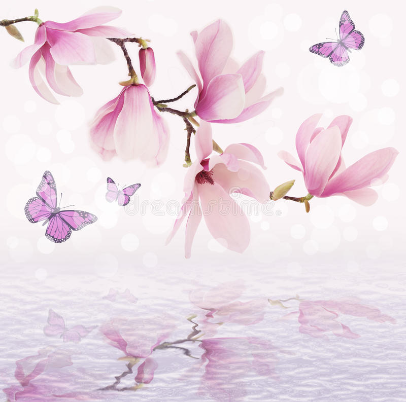 Beautiful magnolia flowers reflected in the water stock photography