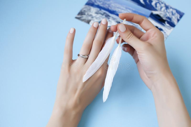 Beautiful manicured woman hands with white feather on blue background royalty free stock photography