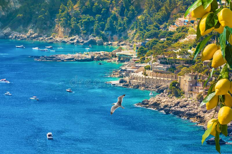Beautiful Marina Piccola with rocky shore and clear blue sea, Capri Island, Italy. Bunches of fresh yellow ripe lemons are in foreground royalty free stock images