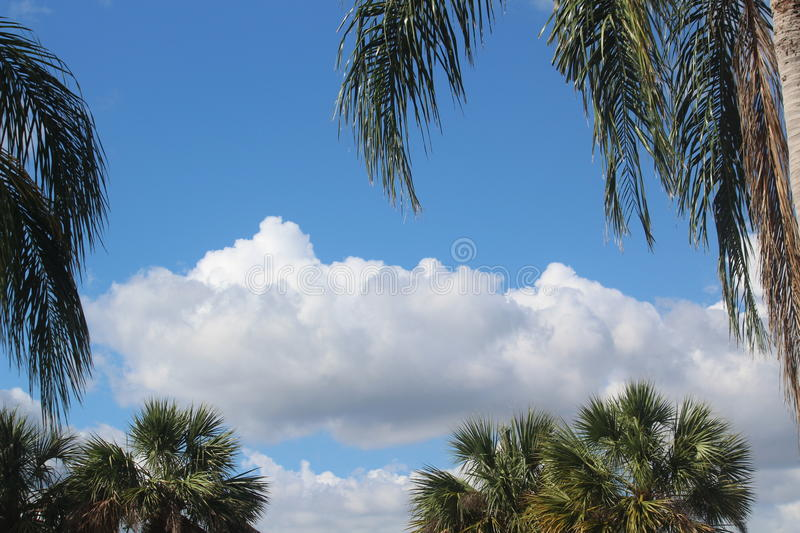 Maui Blue Sky, with White Puffy Clouds & Green Palm Trees stock image