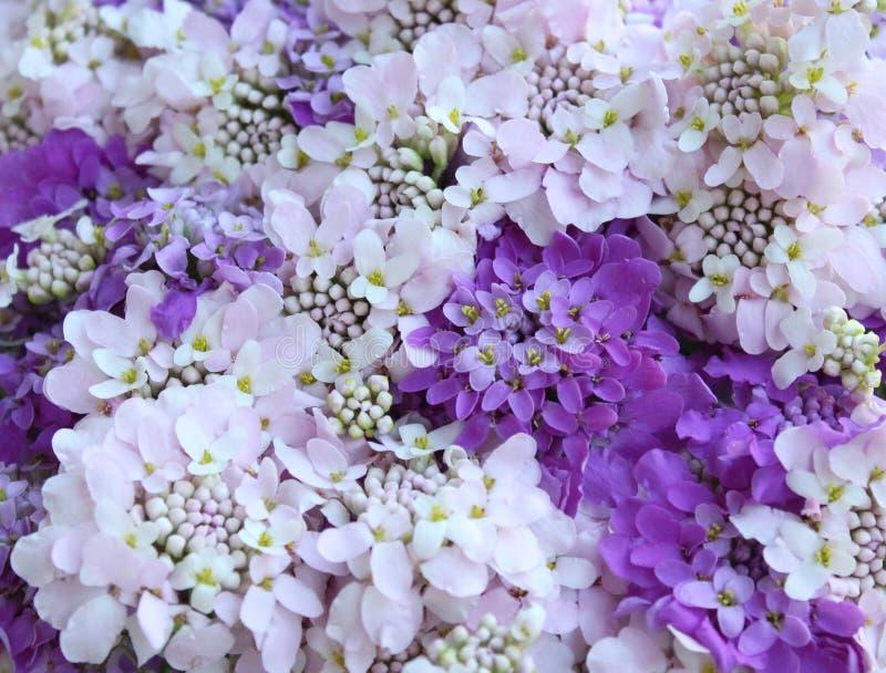 Beautiful meadow flowers stock image