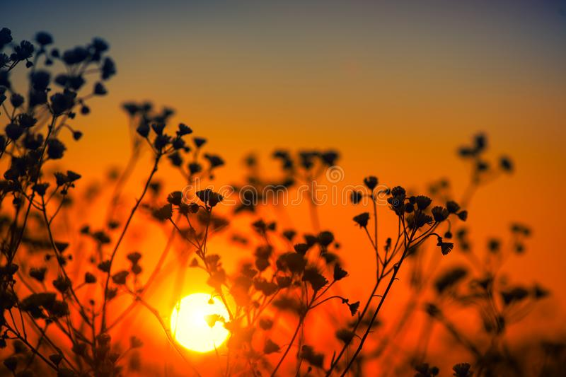 Beautiful meadow with wild flowers over sunset sky. Field of camomile medical flower, Beauty nature background royalty free stock images