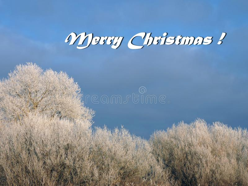 Merry Christmas card done using snowy trees , Lithuania. Beautiful Merry Christmas card done using photo with trees in frost in winter royalty free stock photography