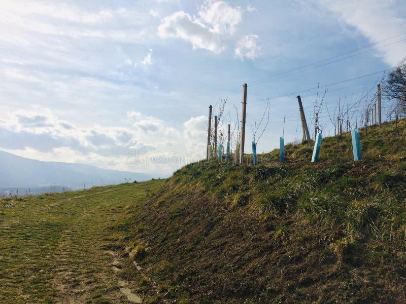 Beautiful & x22;Mestni park& x22; in Maribor, Slovenia. Sunny day in city park & x22;Mestni park& x22; in Maribor stock photos